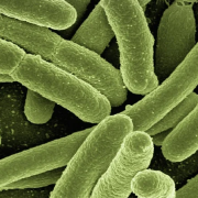 eliminare i batteri